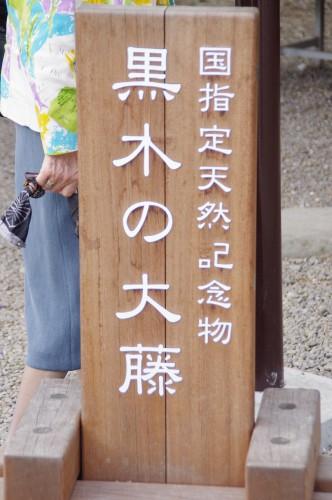 国の天然記念物に指定されています。