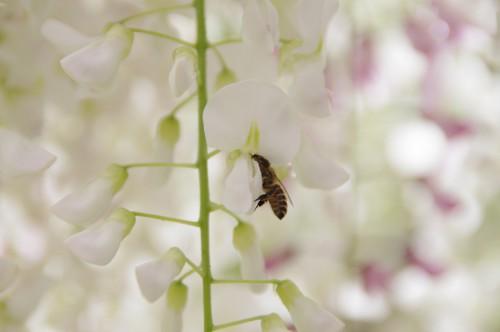 ハチもかわいい。